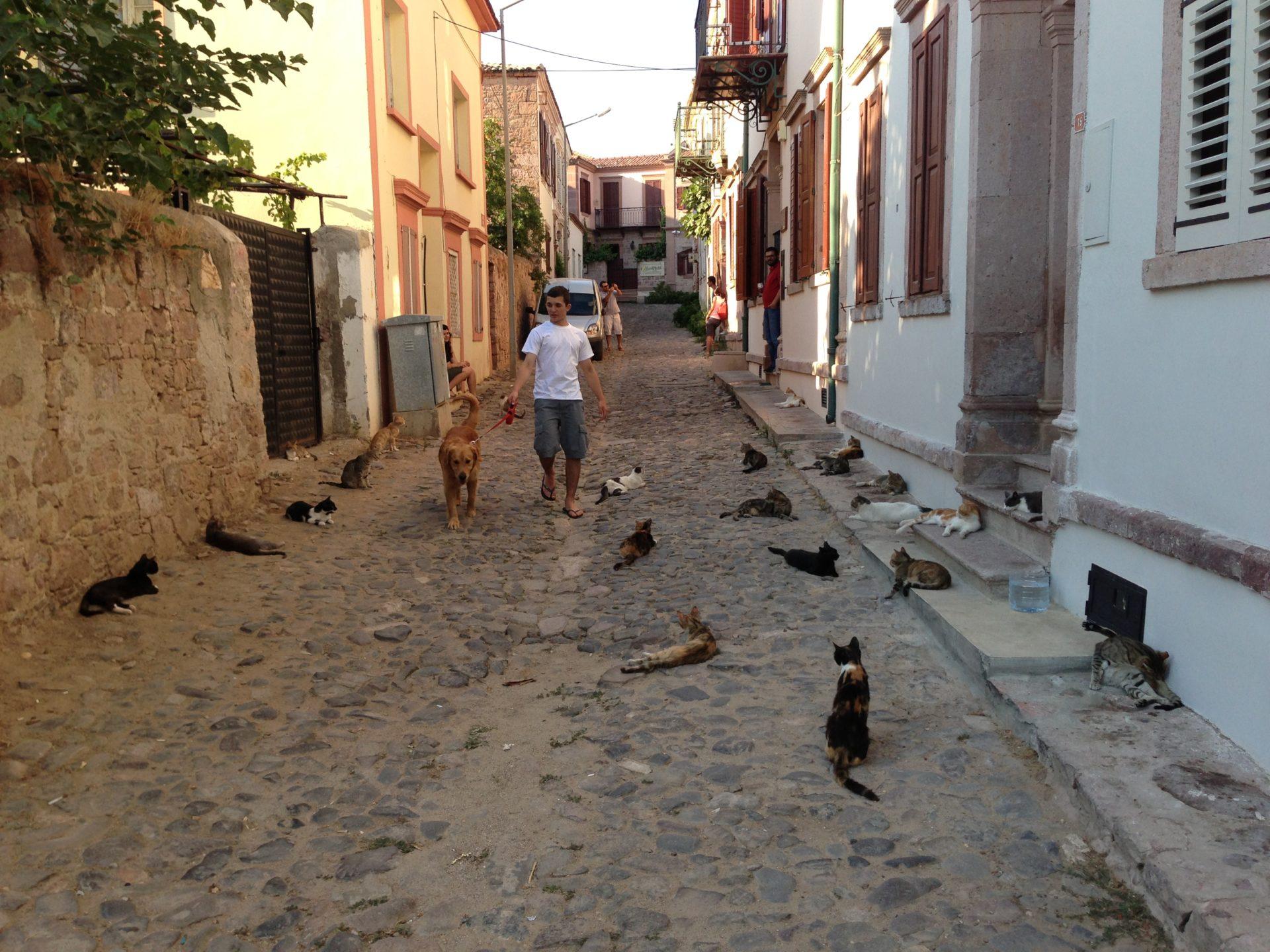 Cool Turkish cats