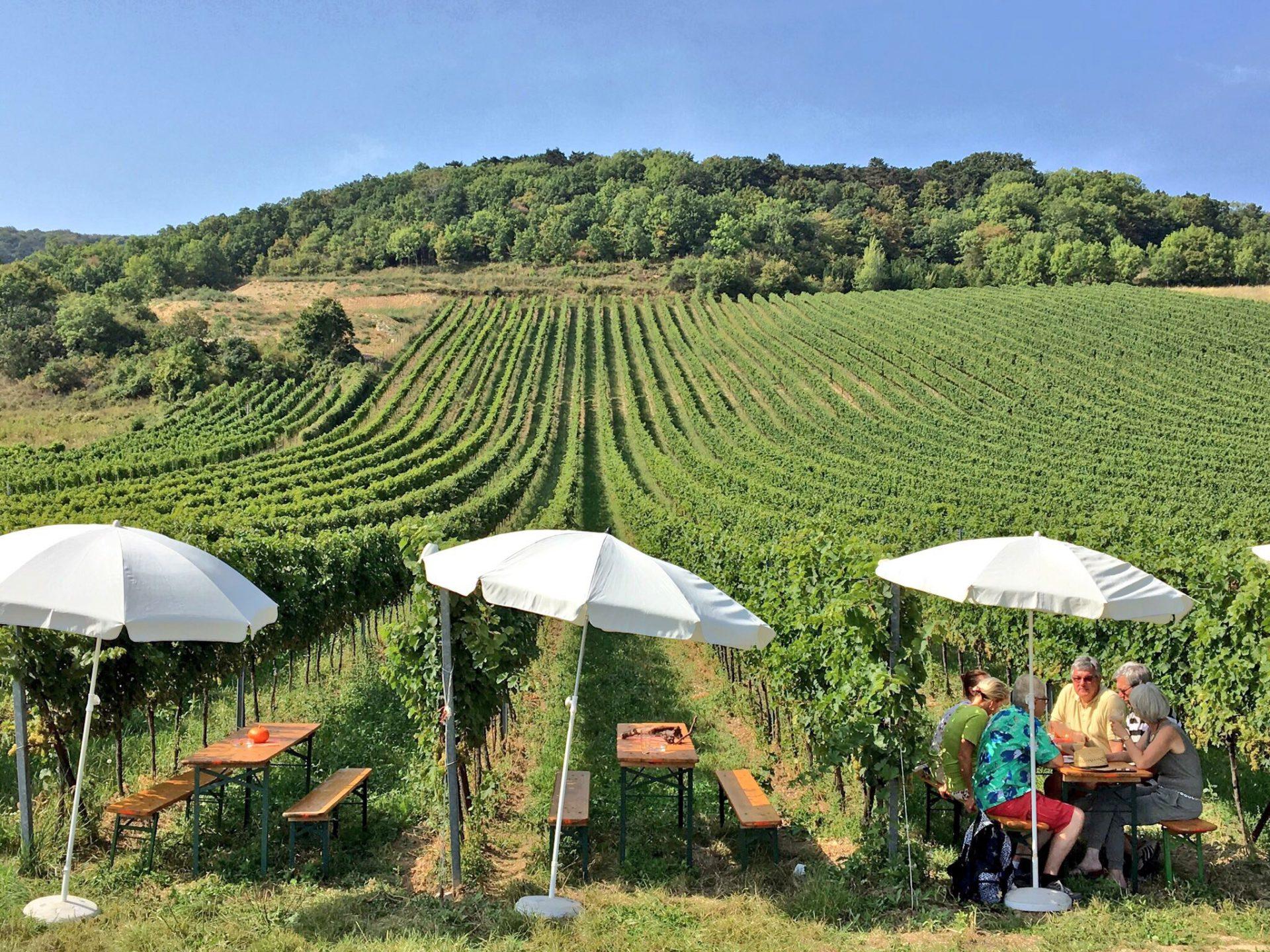 Vineyard near Vienna